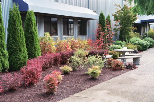 Landscaping Design & Install