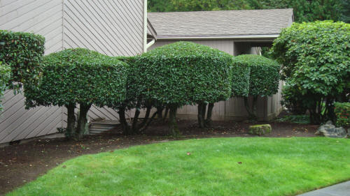 Condominium Association Landscaping Maintenance